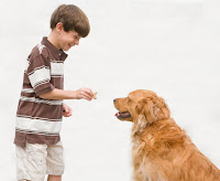Dog Obedience Training The Key to Raising a Well Behaved Dog