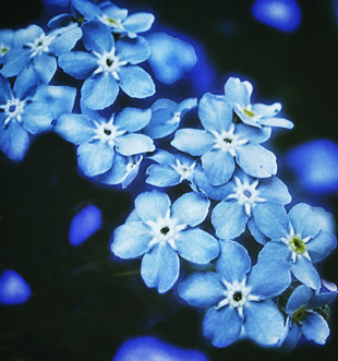 Forget Me Not | Alzheimer's Reading Room