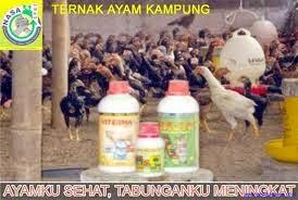 obat ayam viterna