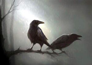 Dois corvos em um galho de árvore, dia chuvoso e cinzento.