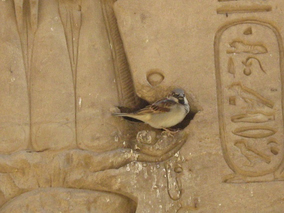 Egyptian-Bird-Nile-Cruise-Egypt-2008-Sealiberty-Cruising