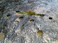 Detalls dels possibles forats de l'antiga resclosa