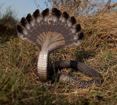 Rare snakes with many heads on earth
