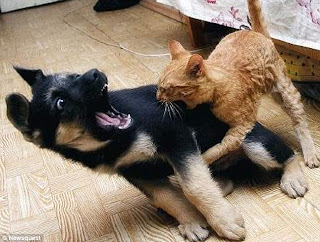 Funny Animal Fights