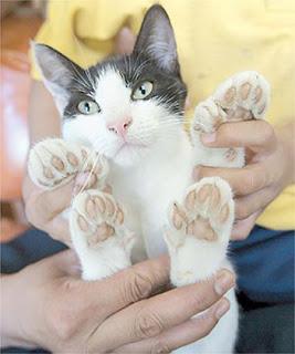 Las Patas de los Gatos