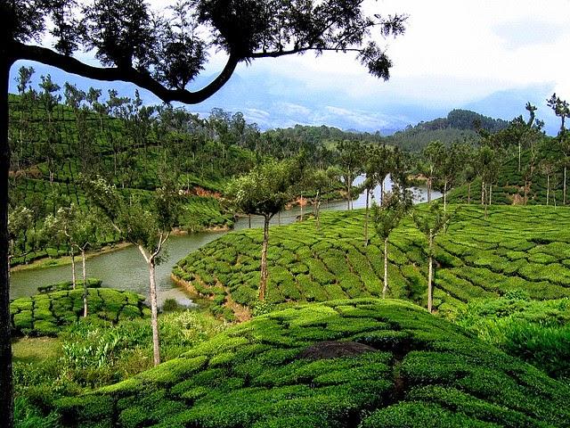 La ruta del té – India
