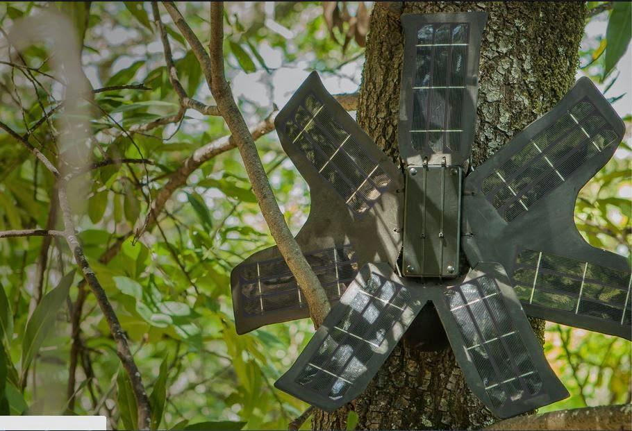 rainforest-connection-instalado-na-floresta