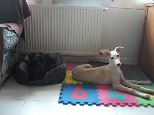 Silva y Rocco