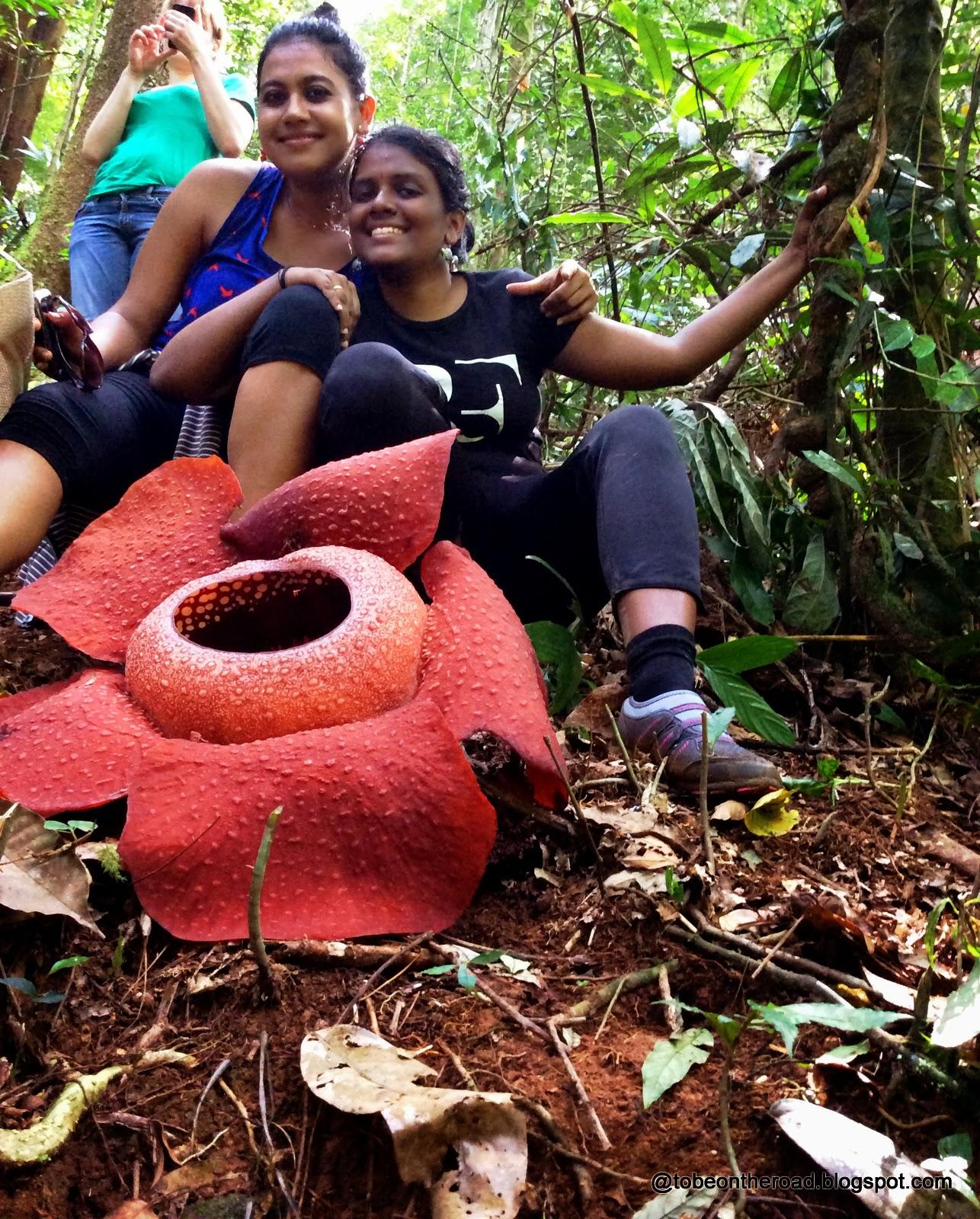 Rafflesia,Flower,Cameron
