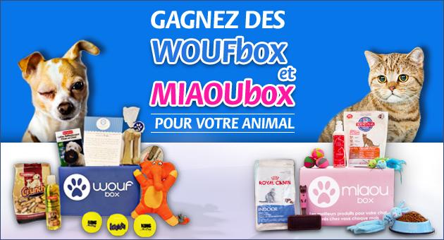 Des Woufbox et des Miaoubox à gagner