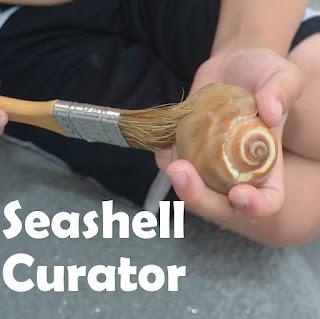seashell activity