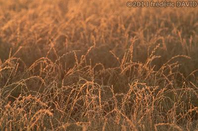 matin champ doré givre campagne Seine-et-Marne
