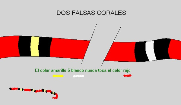 falsa serpiente: