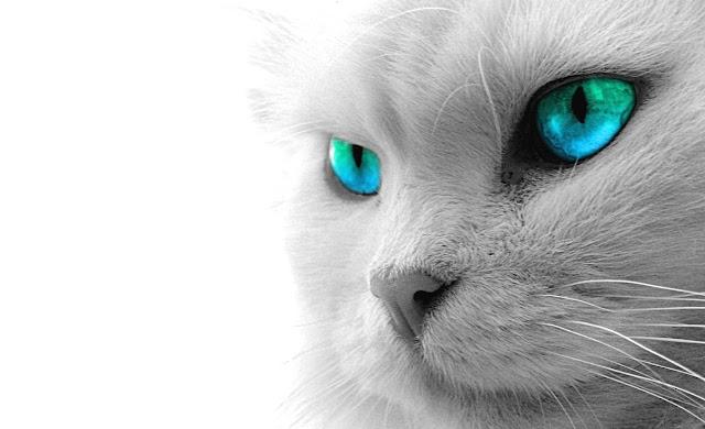 kediler masaüstü arkaplan resmi