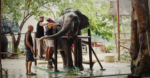 elephantstay www.elephantstay.com