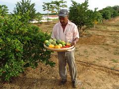 Produção de frutos com água de cisterna
