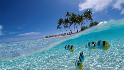 Beautiful Fishes   World Images Gellery