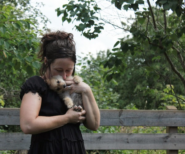pomeranian, hund, blandras, valp, valpar, valpen, valparna, trädgård, staket
