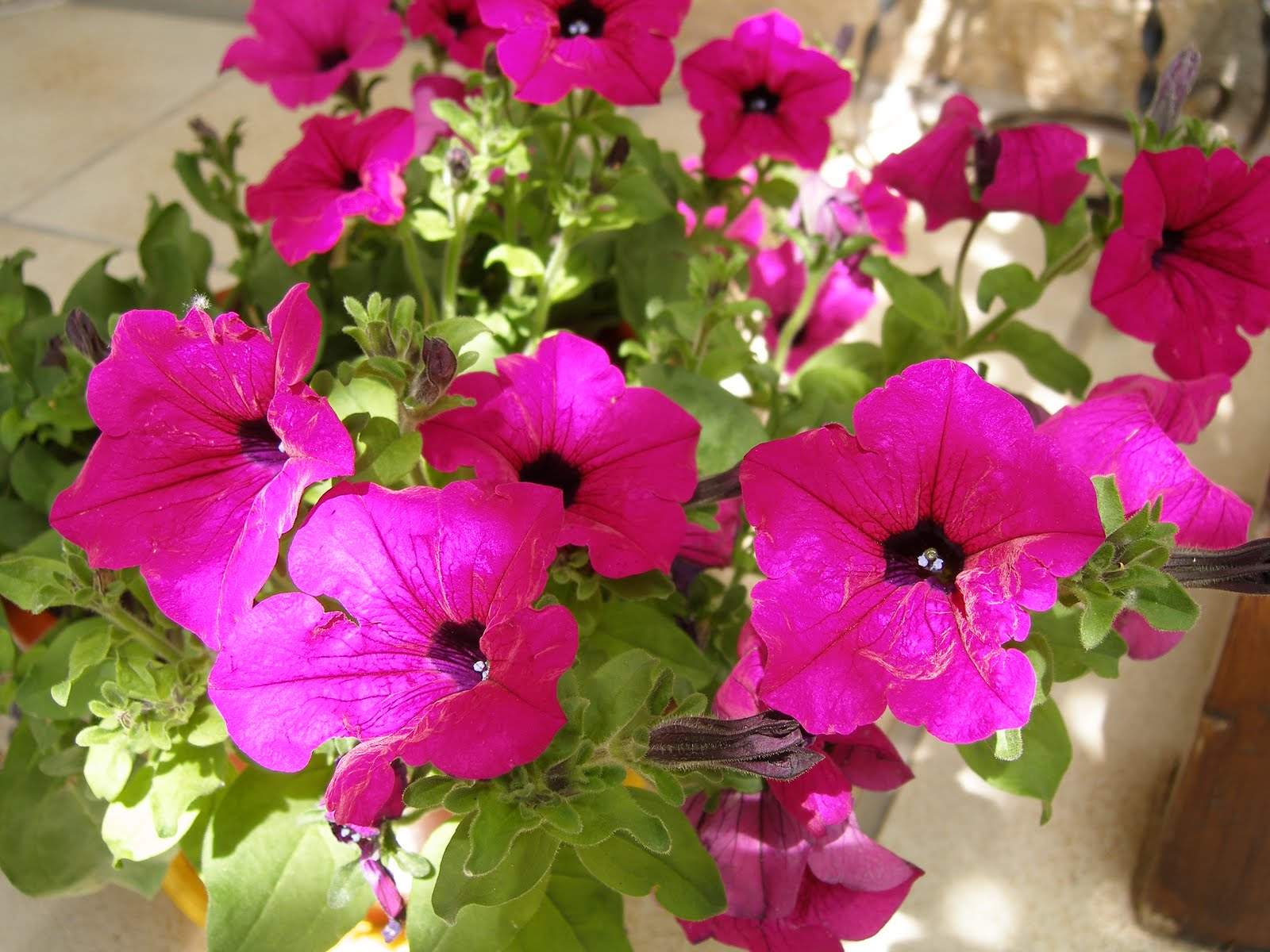 Las Mejores Imagenes Gratis Flores