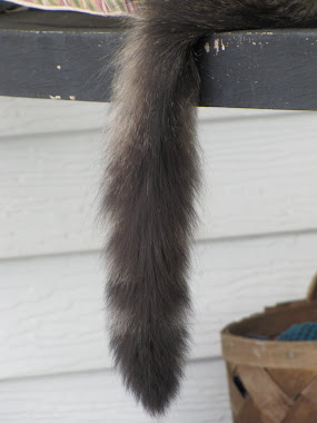 Cat's Tail Hanging Down from Porch Swing