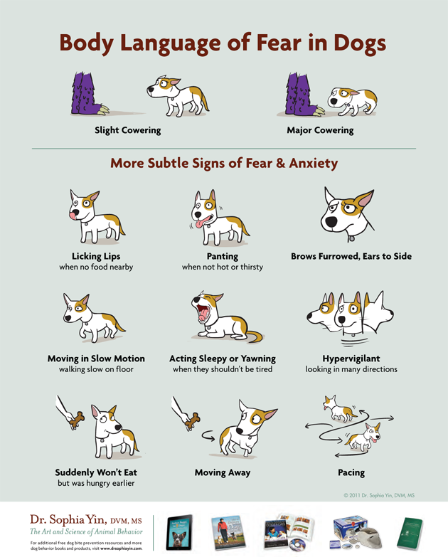 Dog Body Language With Other Dogs Learning Dog Body Language