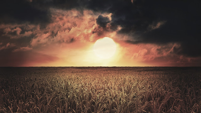 Sun Clouds And Wheat HD Wallpaper