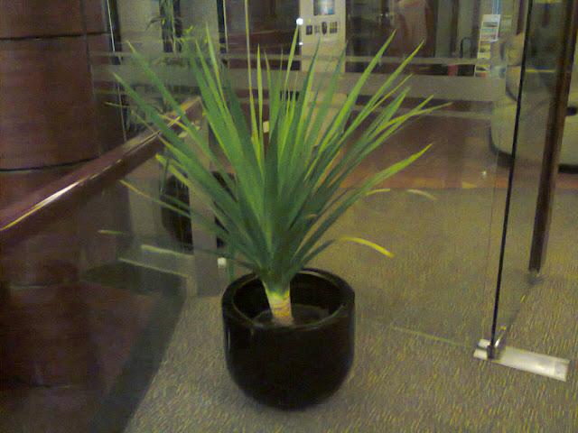 sewa tanaman rental pandan bali
