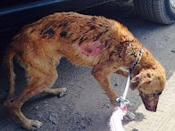 Please help the abandoned dogs of Peru