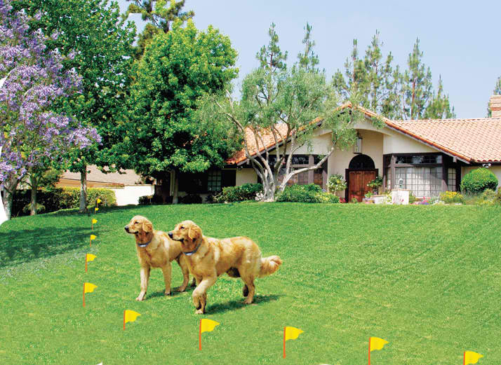 Pet Solutions Considering A Dog Fence