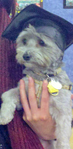 Terry (Now Sprinkles) graduated from obedience class