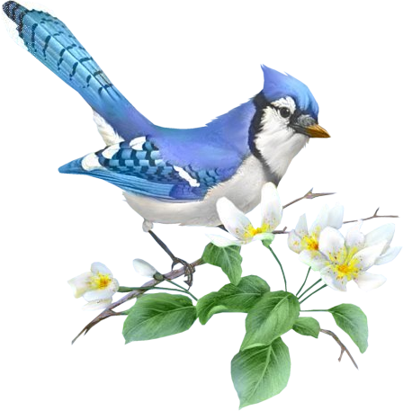 transparent flowers with birds on happy birthday cakes gif