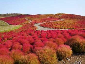 Hitachi_Seaside_Park