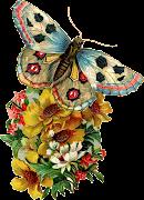 IMÁGENES PARA PHOTOSCAPE, PHOTOSHOP Y GIMP DE ANIMALES 18 (MARIPOSAS) 01 mariposas