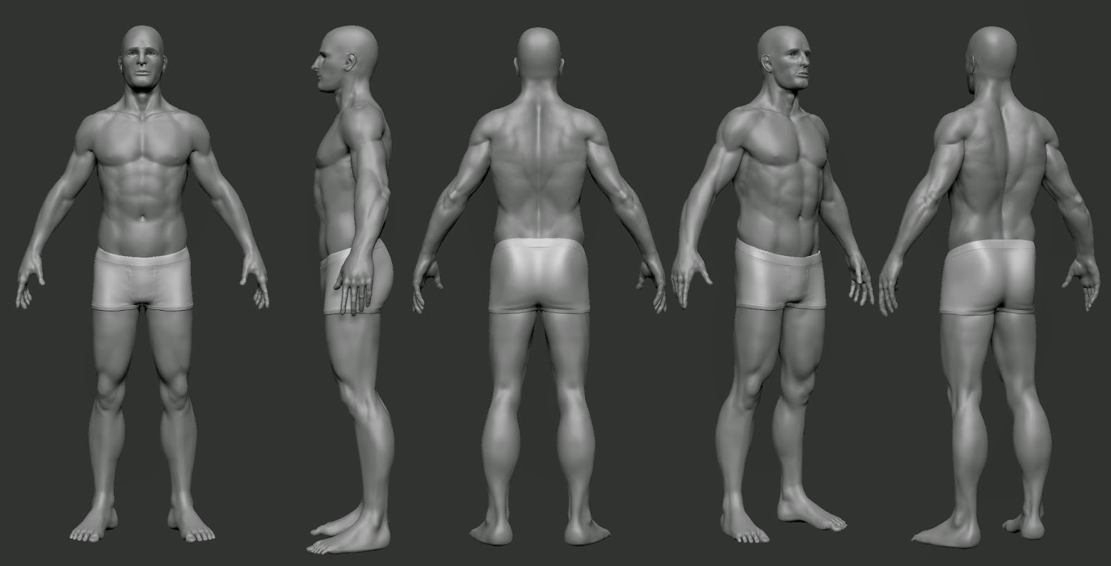 Magnificent 3d Male Anatomy Image - Physiology Of Human Body Images ...