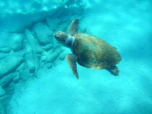 Η απόλυτη εμπειρία.... θαλάσσιο καγιάκ στο ιόνιο!!