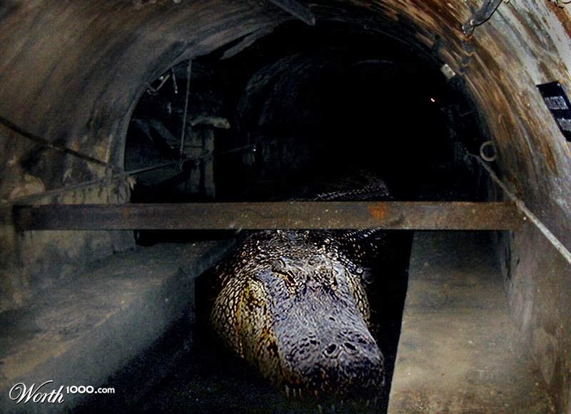 Sewer alligator urban legend