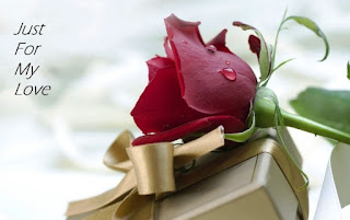 rose  day facebook pictures