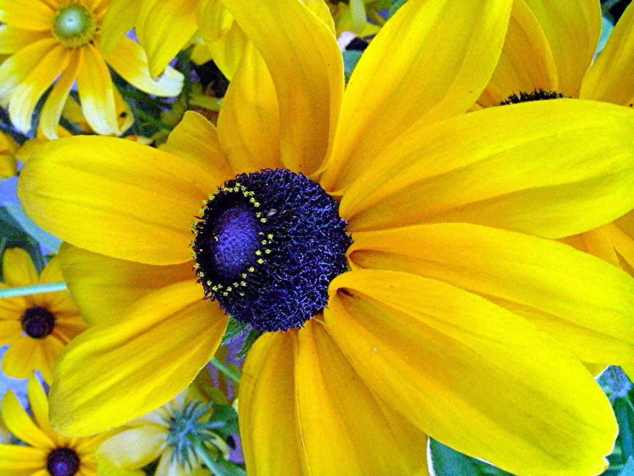 Chimney Bells Best Yellow Flowers For Your Garden