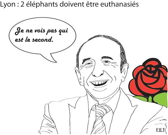 Lyon-2-éléphants-de-Lyon-doivent-être-euthanasiés. Gérard-Collomb-ne-voit-pas-qui-est-l'autre-fej-dessin