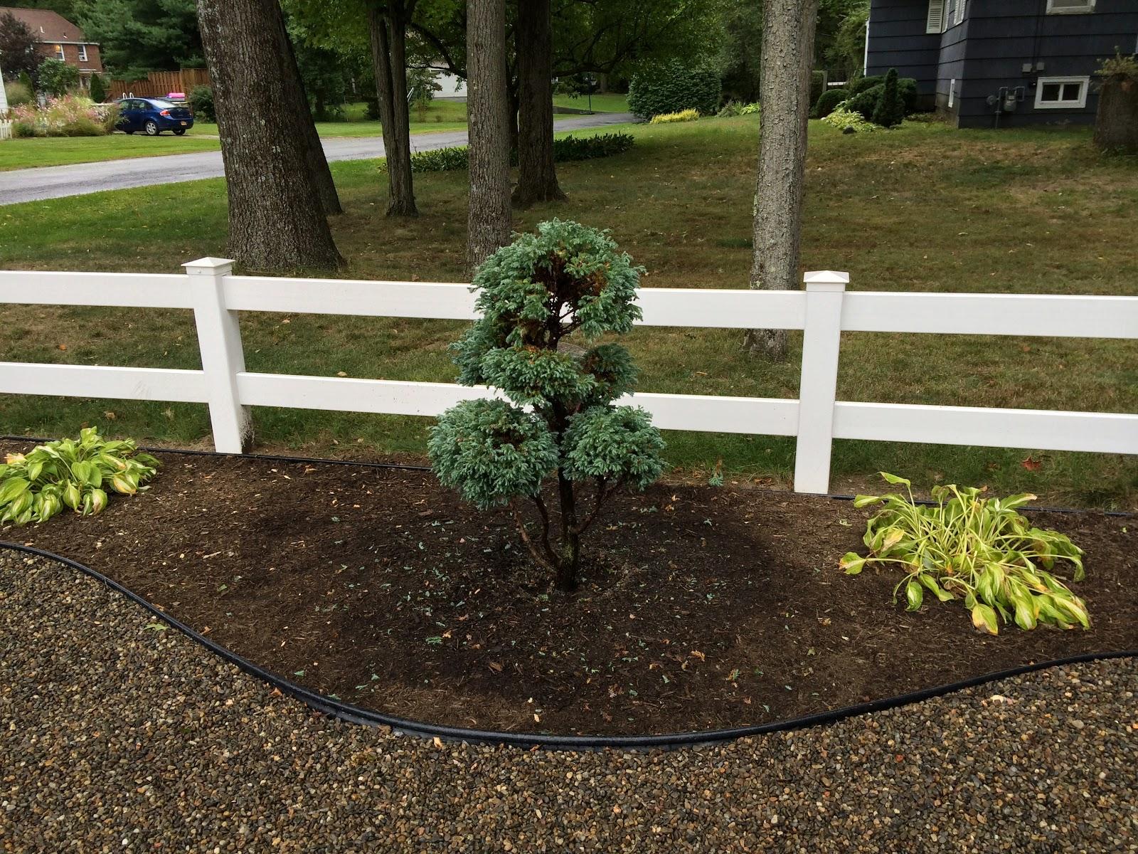 My Zen Garden: Summer Adjustments