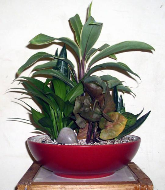 My blog caring for indoor plants - Five indoor plants that absorb humidity ...