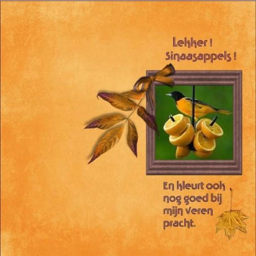 lo 3 - Sept.2016 - Lekker - Sinaasappels