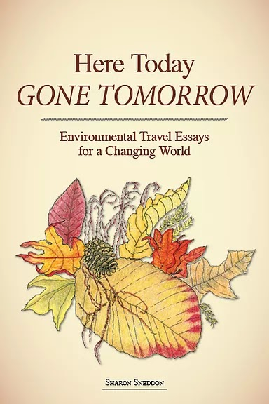 Here Today, Gone Tomorrow by Sharon Sneddon