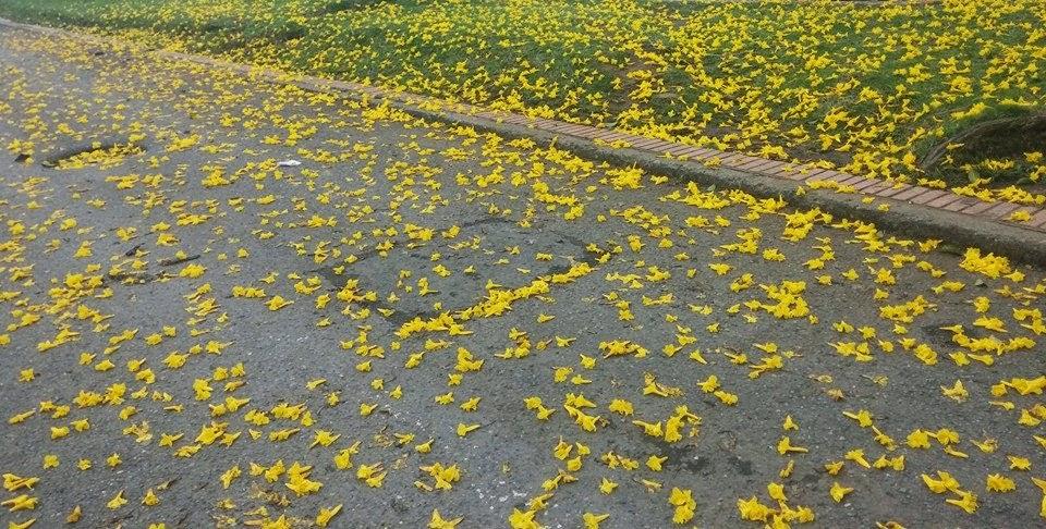 Colombia FLORES DE COLOMBIA SusMedicos com - Fotos De Flores Colombianas