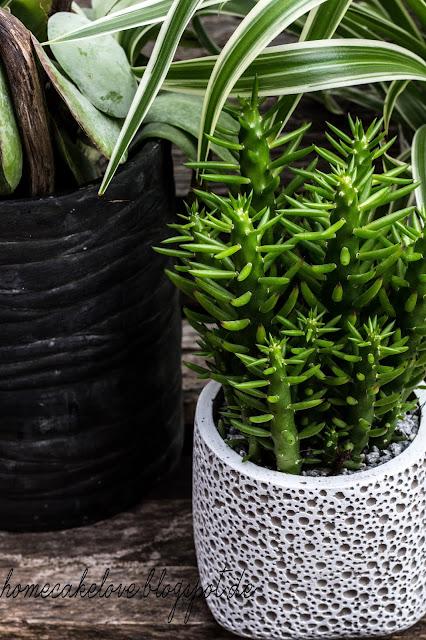 urban jungle, zimmerpflanzen, wohnen mit pflanzen,