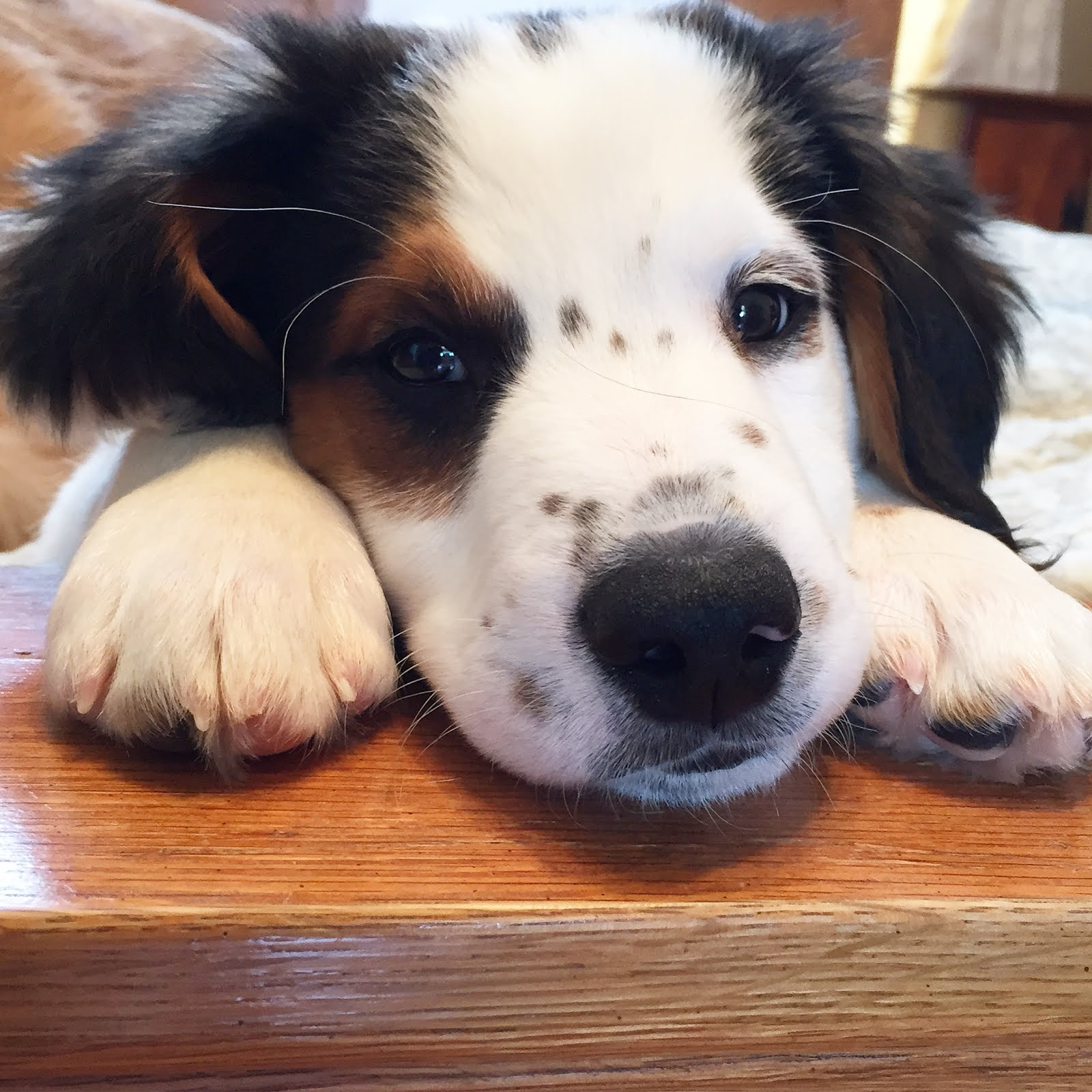 Steve the Wonder Dog