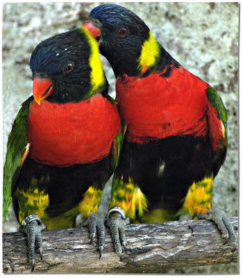 %D8%B7%D9%8A%D9%88%D8%B124 صور رمانسية طبيعية لأجمل الطيور 2014