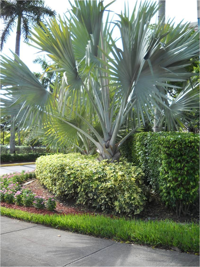 Vida a lo verde living in green qu es el mulch for Jardines grandes