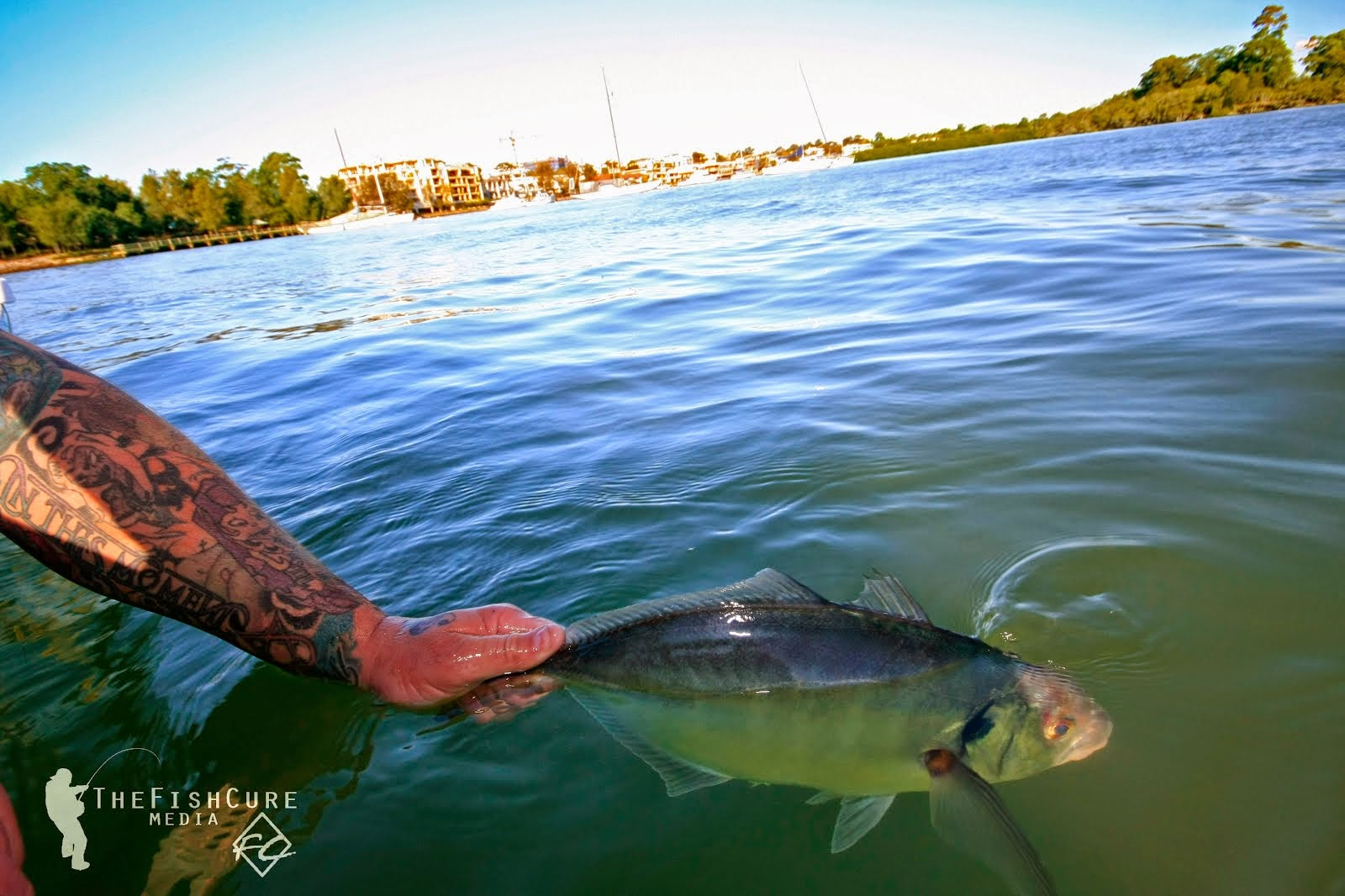 Silver Trevally Release