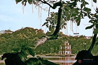 Travel , voyage , Vietnam , nord, tonkin , mekong, Ha Long , Halong ,H'mong , laos , voyage photographe , voyage vietnam , au nord , au